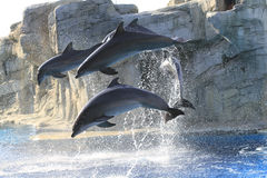 Acrobats dolphins Stock Images