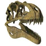 Acrocanthosaurus Dinosaur Skull Royalty Free Stock Images