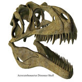 Acrocanthosaurus Skull with Font Stock Images