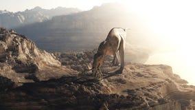 Acrocanthosaurus Stock Photos
