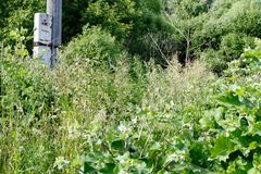 Acrocephalus palustris Nest-Lebensraum von Marsh Warbler landschaft Stockfoto