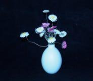 Acroclinium Roseum eller Straw Flowers In Vase Royaltyfri Bild