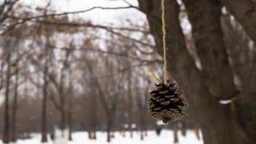 Acron hanging on tree Stock Photos
