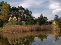 Acroos de los árboles el lago foto de archivo