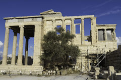 acropolisaerechtheum athens greece Arkivfoton