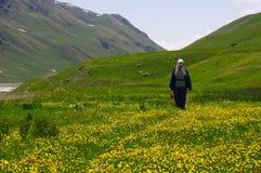 ...across flowering meadows. Kyrgyzstan, Tian-Shan, 3500 m. altitude, june Royalty Free Stock Photo