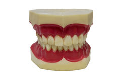 Acrylic denture set Stock Image