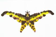 Acrylic moth Royalty Free Stock Image