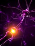 actief neuron Stock Afbeelding