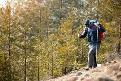 Actieve mens die in bosbergen wandelen Stock Afbeelding