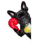 Actieve sporthond Royalty-vrije Stock Afbeelding