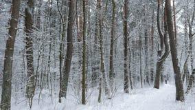 Actieve vrouw Dwarsland die in het bos ski?en stock video