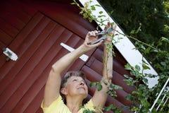 Actieve vrouw in Rose Garden stock foto's
