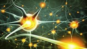 Actieve zenuwcellen Stock Afbeeldingen