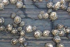 Actinies de Hexacorallia, espèce marine, animaux vivant dans l'océan, fond Images libres de droits