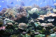 Actinies et coraux 4 images libres de droits