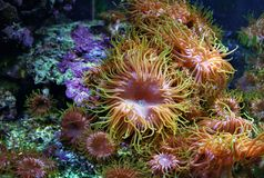 Water-world. Coral garden. royalty free stock photo