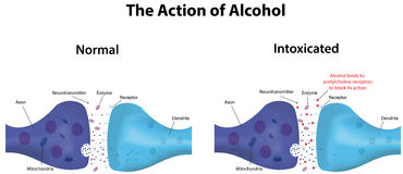 Action of Alcohol Stock Photography