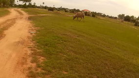 Action cam rider`s point of view riding down an unpaved dirt road in Southeast Asia; meet buffalo. Action cam rider`s point of view riding down an unpaved dirt stock video footage
