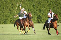 Action de polo au polo de Saratoga Photo stock