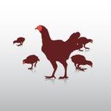 Action de poulet Photo stock