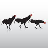 Action de poulet Photos libres de droits