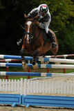 Action de Showjumping Photo libre de droits