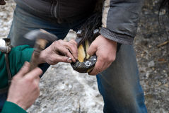 The action of horseshoeing. Suitable to use for a photo-reportage Stock Images