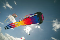 Action Kite Sport Royalty Free Stock Image