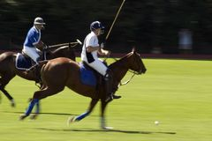 Action shot of a polo match Stock Image