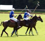 Action shot of a polo match. Speed action shot of a polo match in progress Royalty Free Stock Photography