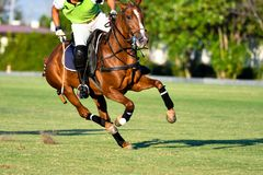 Action Shot Of the Polo Player Royalty Free Stock Images