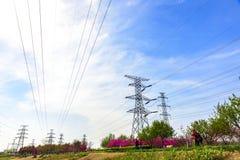 Actionnez les installations sous le ciel bleu et les nuages blancs Photographie stock