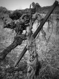 Actions de vigne dans les Frances Image stock