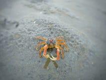 Actitud de un cangrejo Fotografía de archivo libre de regalías