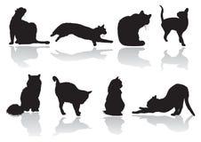 Actitud del gato ilustración del vector