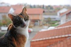 Actitud del gato Imágenes de archivo libres de regalías