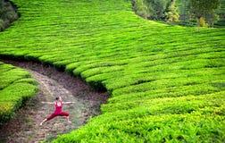 Actitud del guerrero de la yoga en plantaciones de té Foto de archivo libre de regalías