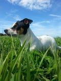 Actitud del perro Fotos de archivo libres de regalías