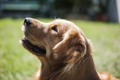 Actitud del perro Imagen de archivo libre de regalías