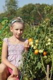 Actitudes de la muchacha en jardín de los tomates Fotografía de archivo libre de regalías