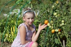 Actitudes de la muchacha en jardín de los tomates Imagenes de archivo