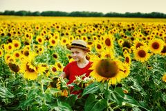 Active boy on a walk near the field with sunflowers on a summer day. Portrait of a boy on a walk at the field in the sunflowers . Boy in a straw hat in the Royalty Free Stock Photography