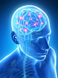 Active brain. 3d rendered illustration - active brain stock illustration