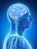 Active brain Royalty Free Stock Image