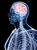 Active brain Stock Photo