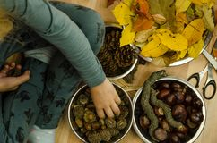 Active child making autumn decorations Stock Images