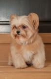 Active Cute Dog Stock Photos