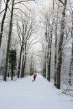Active de personnes d'hiver dans une forêt neigeuse Photographie stock libre de droits