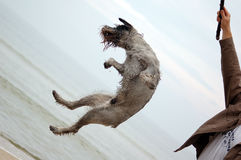 Active dog royalty free stock photography
